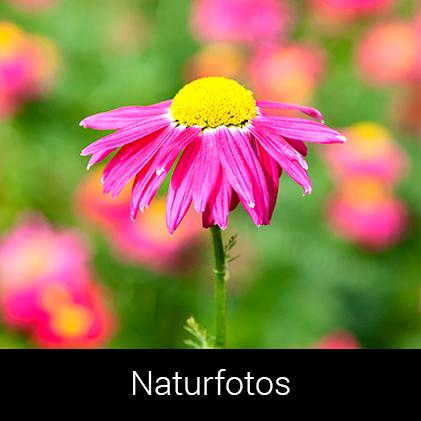 Naturfotos af Palle Christensen