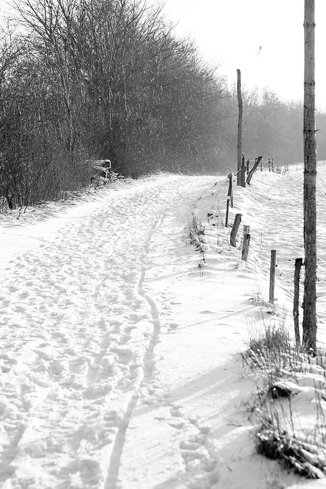 Vinter med sne og træer på smuk sti i sort hvid af Palle Christensen