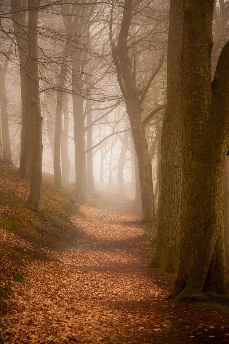 Dis i skoven ved gangsti en efterårsdag