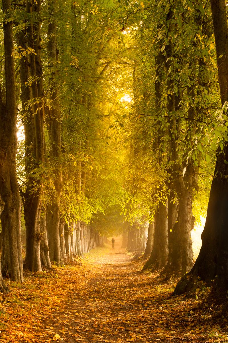 Efterår i skoven en dejlig efterårsdag her alle gennem høje træer