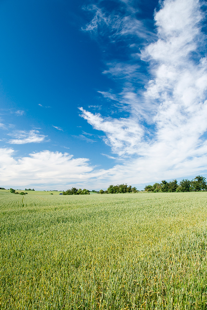 Sommermark med flotte skyer